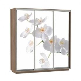 Шкаф-купе Трио фотопечать Белая орхидея, 1800х600х2200, шимо темный