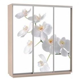 Шкаф-купе Трио фотопечать Белая орхидея, 2400х600х2400, дуб молочный